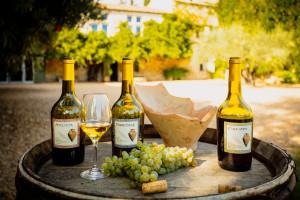 Vignoble et musée, le mas des tourelles à Beaucaire perpétue la tradition du vin à l'antique, de la conduite de la vigne jusqu'au vin lui-même.