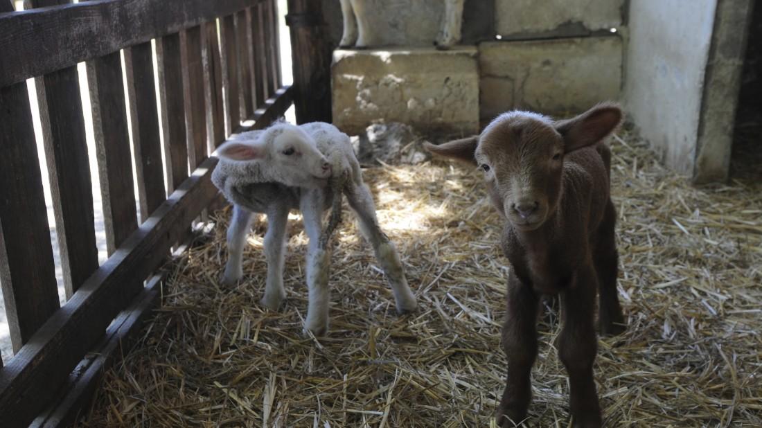 Le Vieux Mas - Les animaux de la ferme